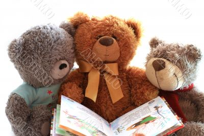 Three toy teddy bear holding an open book.