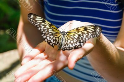 Butterfly on palm