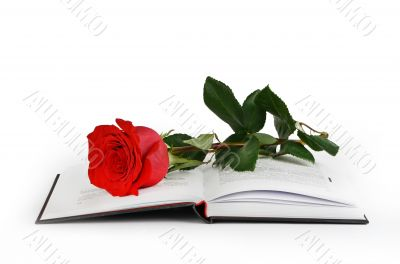 Rose and a book