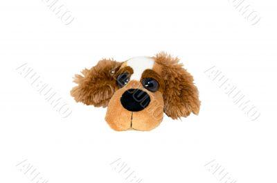 Isolate plush dog