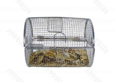 Golc Coins in Spinner Cage