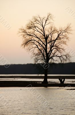 Tree at the sunset