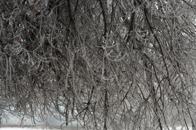 Icy winter branches on a misty day