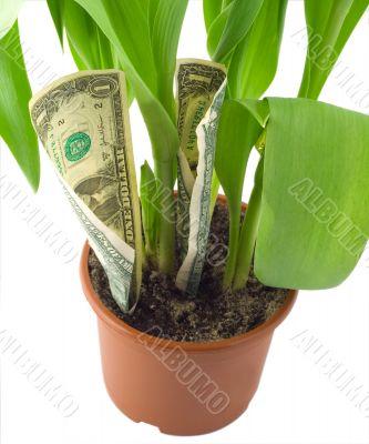 dollar grow pot