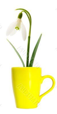 flower in yellow mug