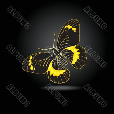 Beautiful fairy gold butterfly with shadow