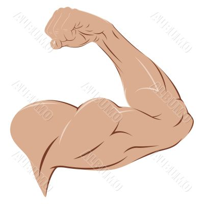 Man`s Arm