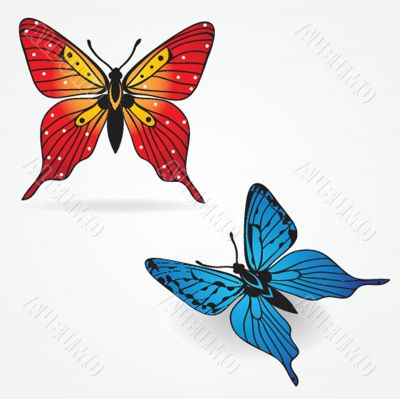 Various vector butterflies on  background