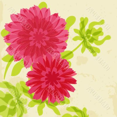 Red and orange chrysanthemums on grunge background