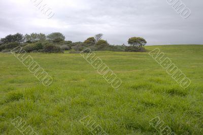 Open Grassy Meadow