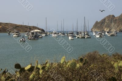 Yachts Moored at Catalina Harbor