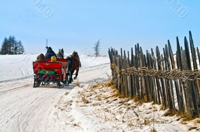 Horse sledge in action in winter landscape