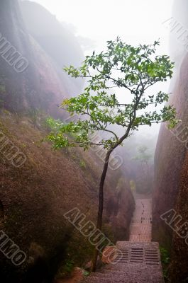 Tree in a mountain path