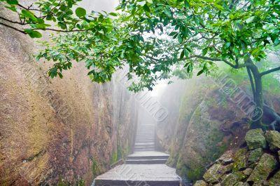 Mountain chinese zen path