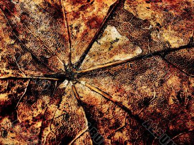 Fantasy grange background from maple leaf