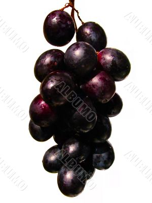 Fresh red grapes branch with water drops