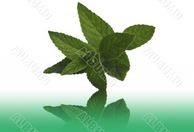 Mint medicinal on a table with a reflection