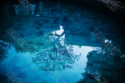 Blue water in swimming pool and tree