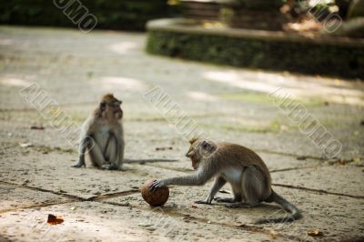 Monkey with ball