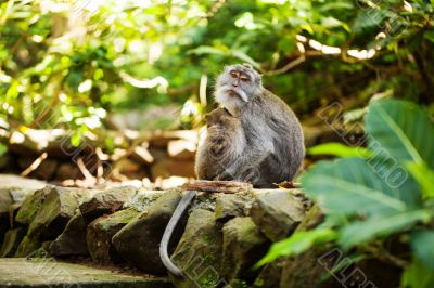 Couple of monkey sitting in forest