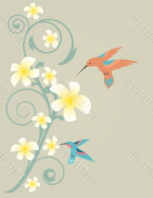 Tropical flowers frangipani (plumeria) .