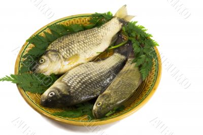 Three carp on ceramic dish and greens