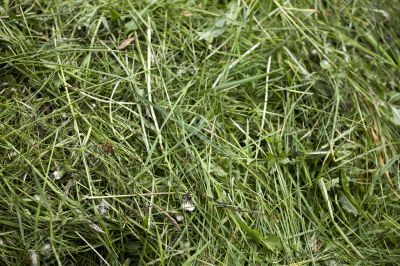 Fresh cut green grass texture