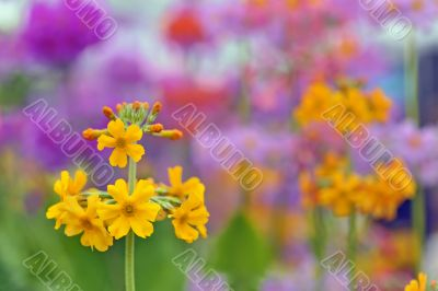 yellow spring flowers macro