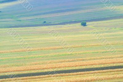 summer field stripes