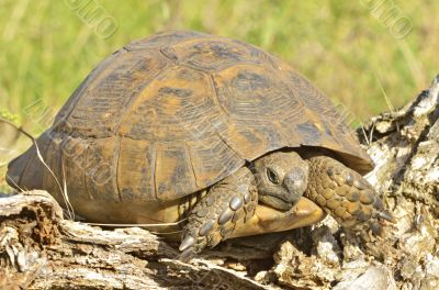 turtle in the wood