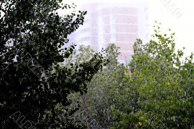 in the city rain
