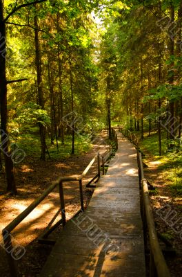 Forest wooden path