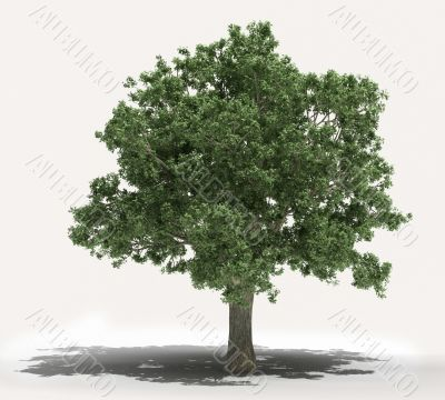 Tree on a light background