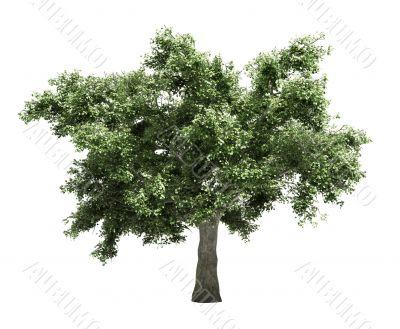 Tree isolated