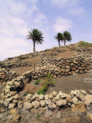 Vineyard, Tiagua, Lanzarote
