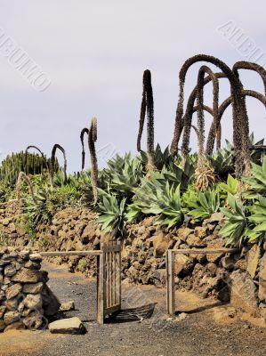 Agricola El Patio Museum, Tiagua, Lanzarote