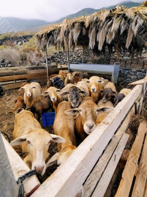 Sheeps Enclosure