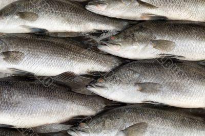 Fresh fish on ice on the market