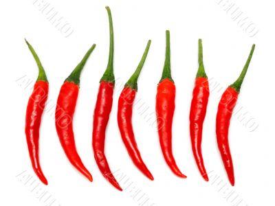 Seven Red hot chili pepper