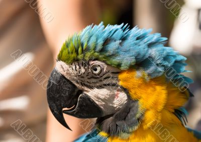 parrot in a profile