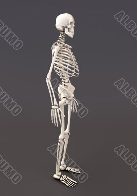 Skeleton of a gray background