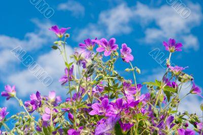 Bright vibrant wild flower