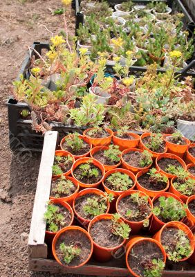 Boxes with seedlings