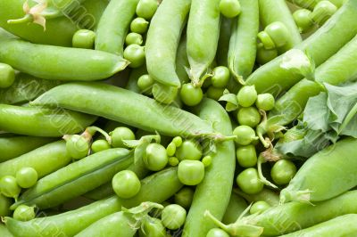 Green peas in the pod