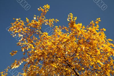 Color burst of autumn foliage