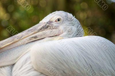 """""""In the Eye of the Pelican"""""""