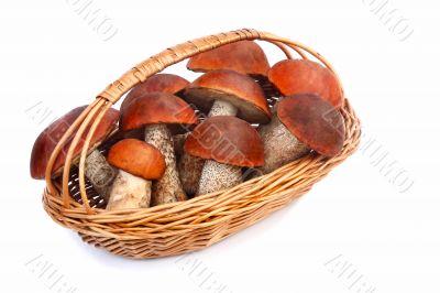 Mushrooms, aspen mushrooms in a wicker basket on a white backgro