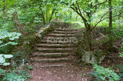 The old staircase overgrown with grass