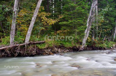 Flowing water of Carpathian mountain stream