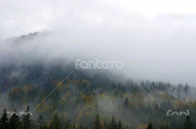 Foggy summer morning in the mountains. Carpathian, Ukraine,